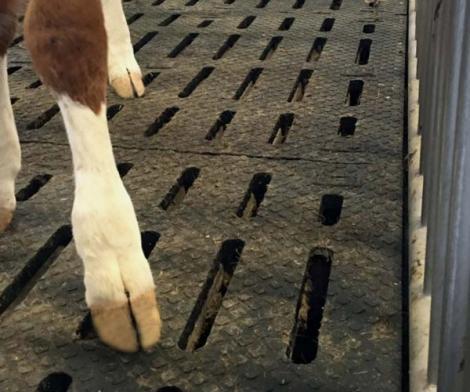 Case collective d'élevage de veaux de boucherie avec tapis caoutchouc Kura SB de Kraiburg à surface incurvée.