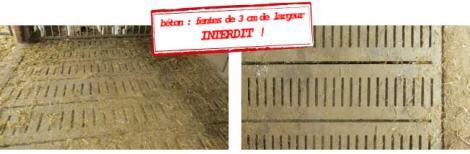 Situation initiale (pour les animaux de moins de 200 kg, les fentes d'un caillebotis béton ne doivent pas excéder 25 mm)