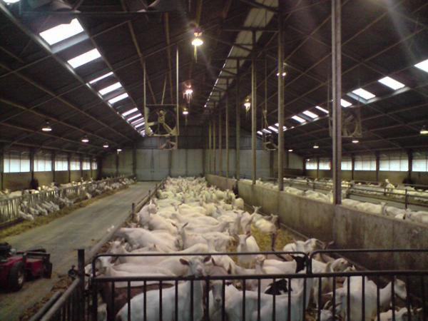 Une bonne ventilation concourt à une ambiance saine, ce qui réduit les nécessité de recourir aux antibiotiques.
