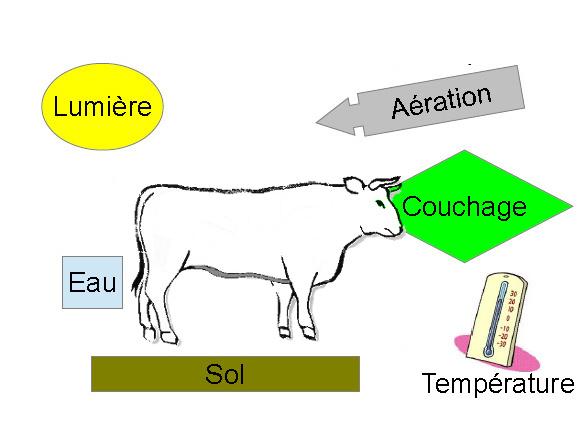 Les différents besoins physiologiques du bovin viande doivent être définis et respectés.