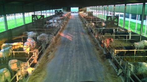 Les éleveurs accordent une grande importance au bien-être animal.