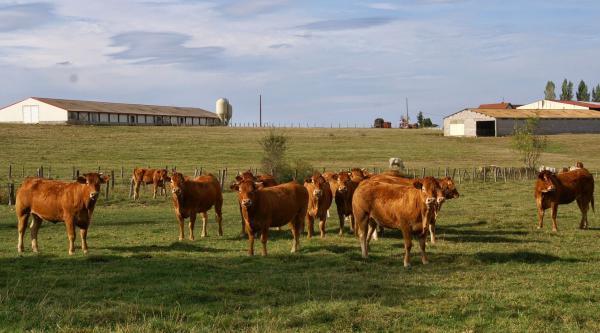 Comprendre les attentes sociétales est primordial pour un éleveur viande.